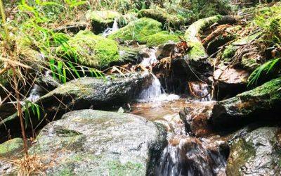 Taller de inmersión en baños de bosques